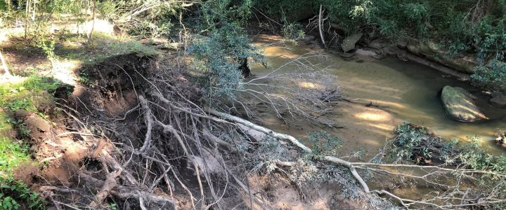 Platypus Landcare – Repairing Riparian in the Cattai Creek Corridor